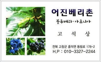 어진베리촌 불루베리 /아로니아 농장(010-3327-2244)