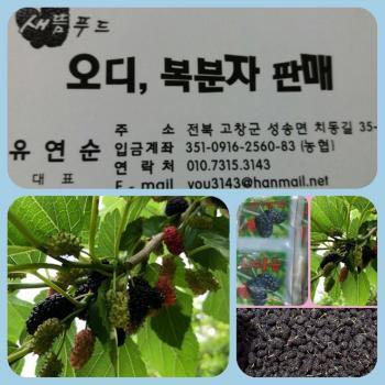 새뜸푸드(유연순) 농장오디(010-7315-3143)