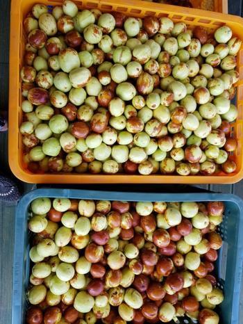 과일로먹는 사과대추(010~2653~1007)